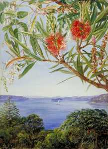 Marianne North - Two Australian Shrubs with Sydney Harbour below