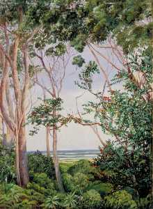 Marianne North - Trees from the Artist's Hut at St John's, South Africa