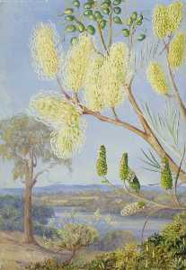 Marianne North - Branch of a Grevillea and a View on the Swan River, West Australia