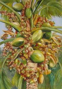 Marianne North - Female Coco de Mer Bearing Fruit Covered with Small Green Lizards