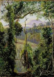 Marianne North - View Looking out of the Bunya Forest at the Summit, Queensland