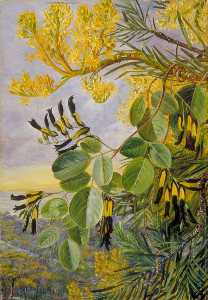 Marianne North - Flowers of the Flame Tree and Yellow and Black Twiner, West Australia