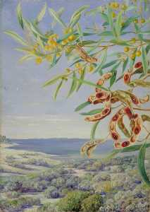 Marianne North - Various Species of Acacia and Other Shrubs, Good for Binding the Sandy Shore at Fremantle, West Australia