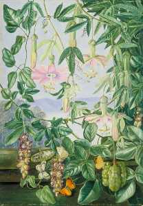 Marianne North - Two Climbing Plants of Chili and Butterflies