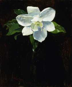 Charles Walter Stetson - Magnolia
