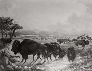 Titian Ramsay Peale - Bison Herd with Pike's Peak in Background, circa 1819 1820, (painting)