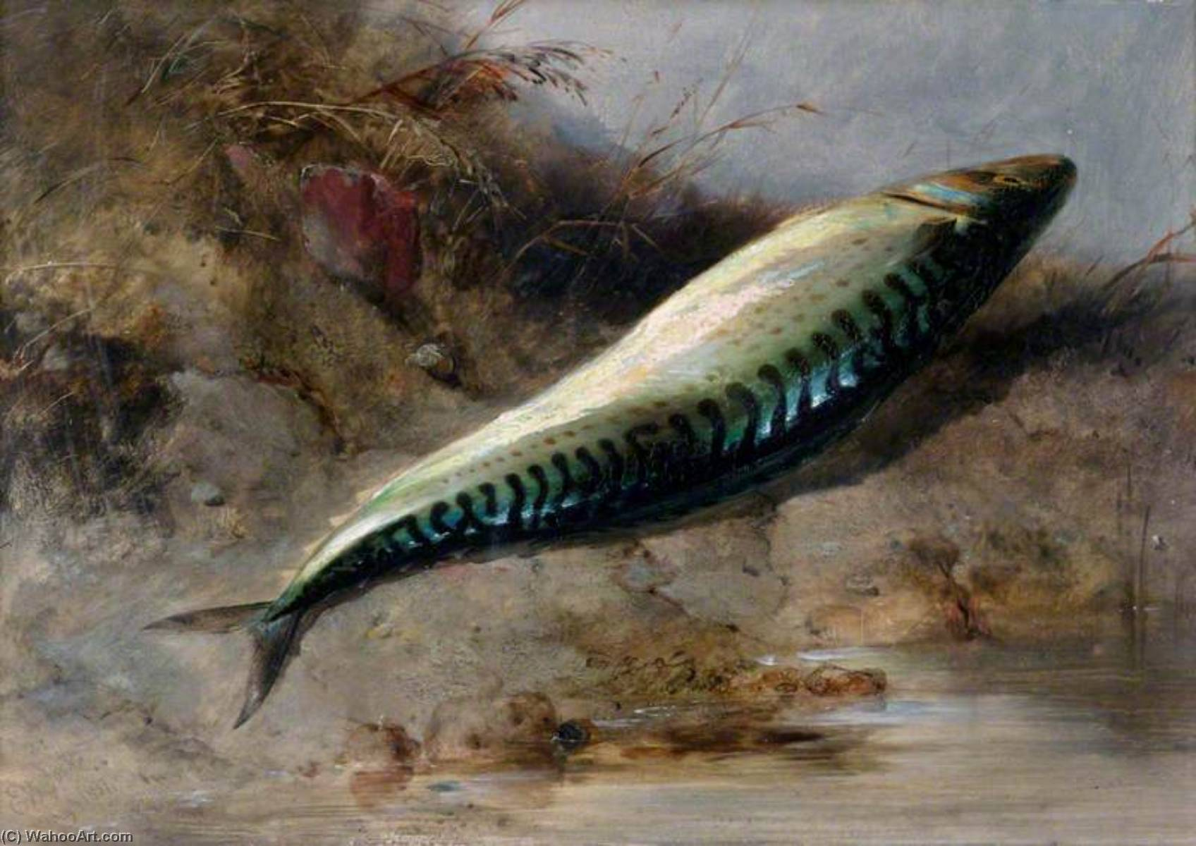 A Mackerel on the Seashore, 1837 by Edward William Cooke (1811-1880, United Kingdom) | Art Reproductions Edward William Cooke | WahooArt.com