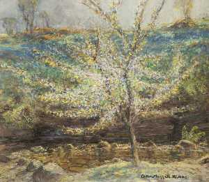William Hoggatt - The Cherry Tree