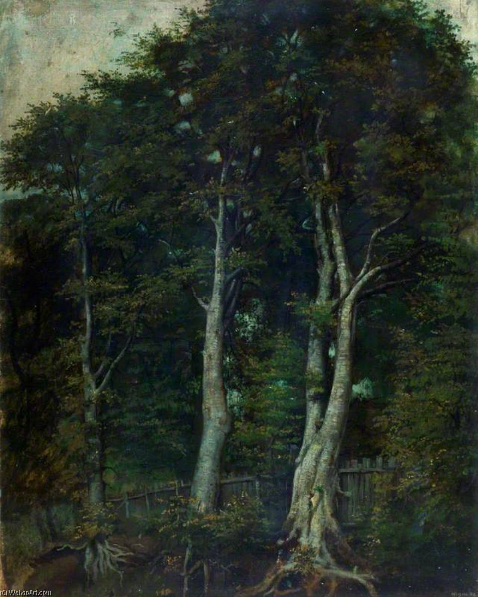 Beech Trees, Oil On Canvas by Alfred Clint