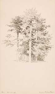 George Elbert Burr - Pines, Public Garden