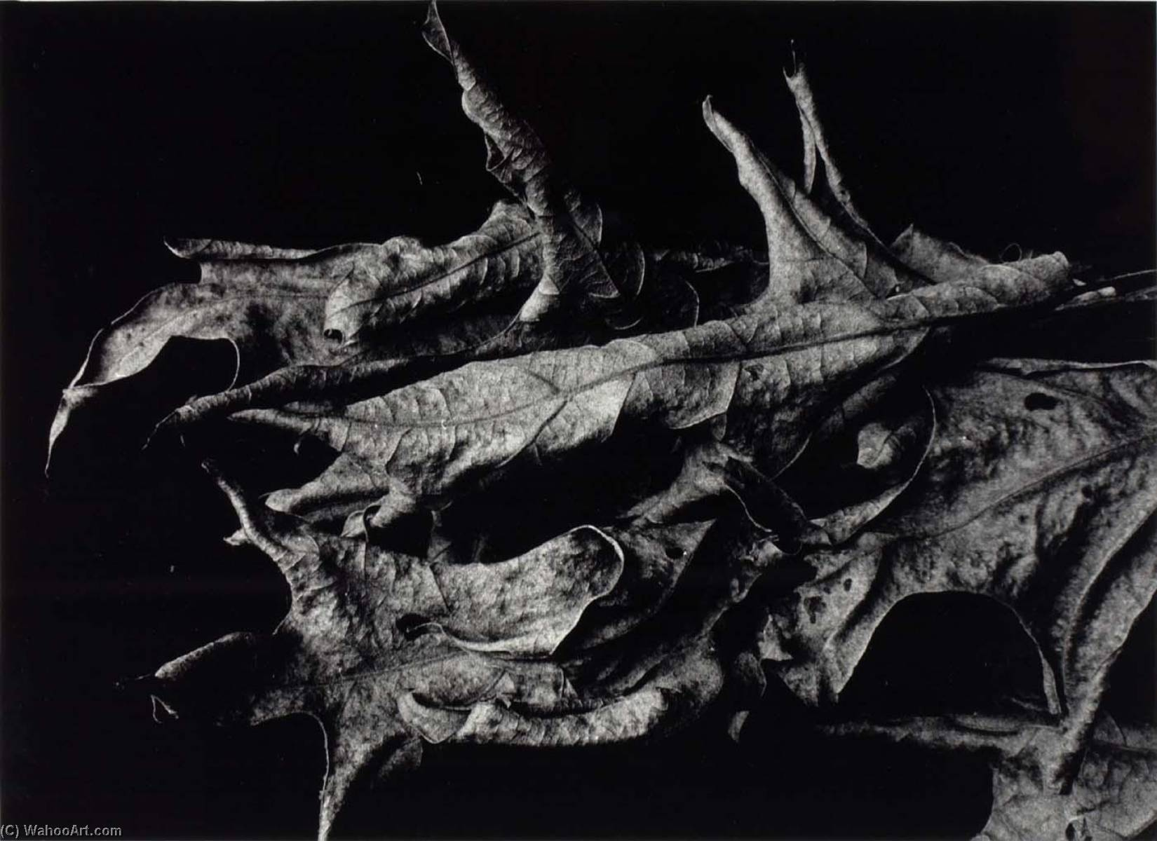 Martha's Vineyard, F13, 1969 by Aaron Siskind (1903-1991, United States) | WahooArt.com