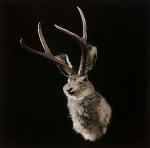 Penny Diane Wolin - Untitled (Jackalope), from the Wyoming Documentary Survey Project