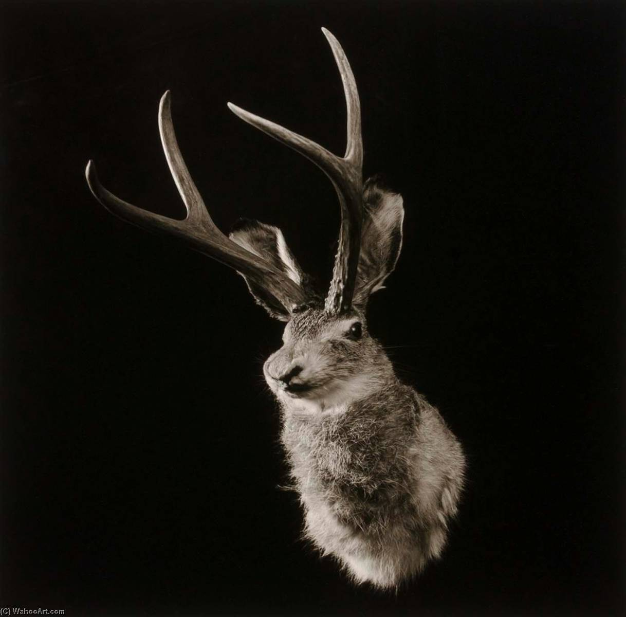 Untitled (Jackalope), from the Wyoming Documentary Survey Project, 1979 by Penny Diane Wolin | Painting Copy | WahooArt.com