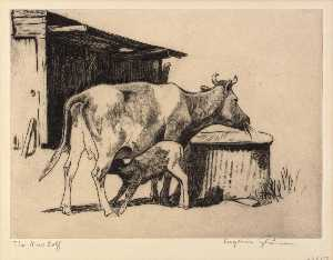 Eugenie Fish Glaman - The New Calf