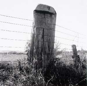 Larry W Schwarm - Fence Post, Douglas County, from the Kansas Documentary Survey Project