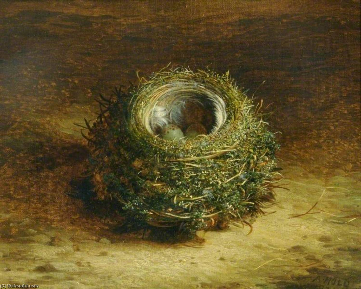 A Bird`s Nest by Abel Hold | Oil Painting | WahooArt.com
