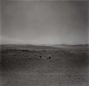 Harry Callahan - (Untitled) ( 372)