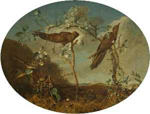 William Tomkins - Cuckoos Displacing a Finch-s Egg