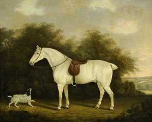 Clifton Tomson - A Saddled Grey Hunter with a Spaniel in a Wooded Landscape
