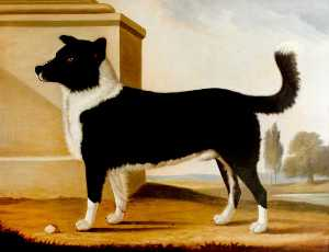 Clifton Tomson - Lord Byron's Dog 'Boatswain' (1803–1808) (The Newfoundland)