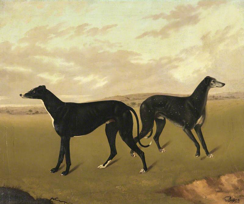 Two Greyhounds, Called 'Demus' and 'Dermot', Oil On Canvas by Edmund Ward Gill
