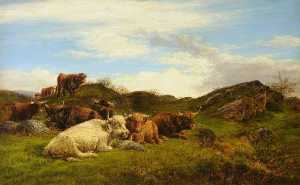 William Luker - Highland Cattle