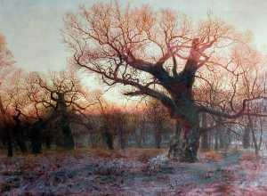 Andrew Mccallum - In Sherwood Forest, Nottinghamshire Winter Evening after Rain