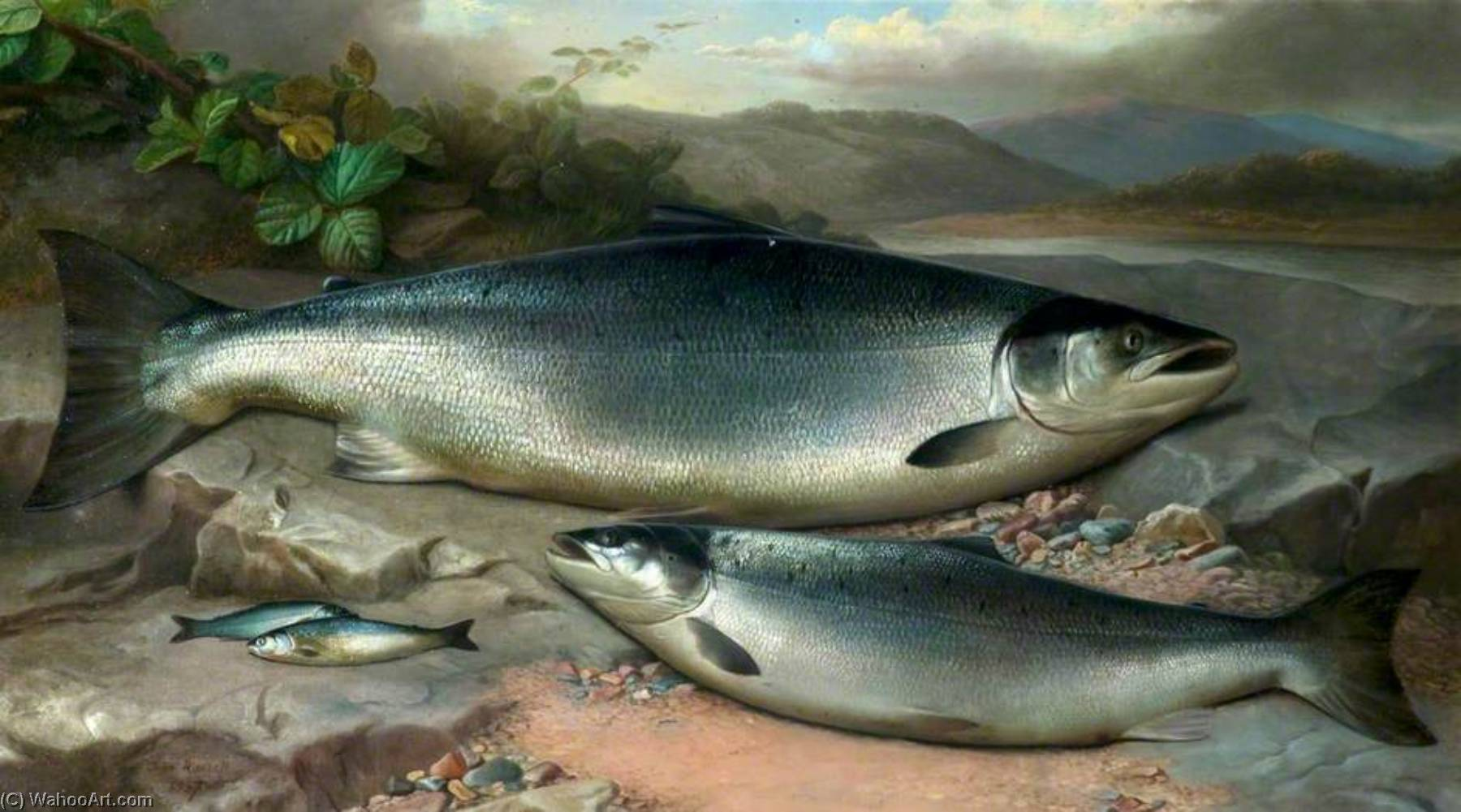 Salmon, Oil On Canvas by John Bucknell Russell