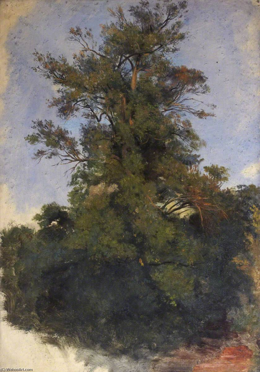 Tree at the Water's Edge, Oil On Canvas by Thomas Stuart Smith