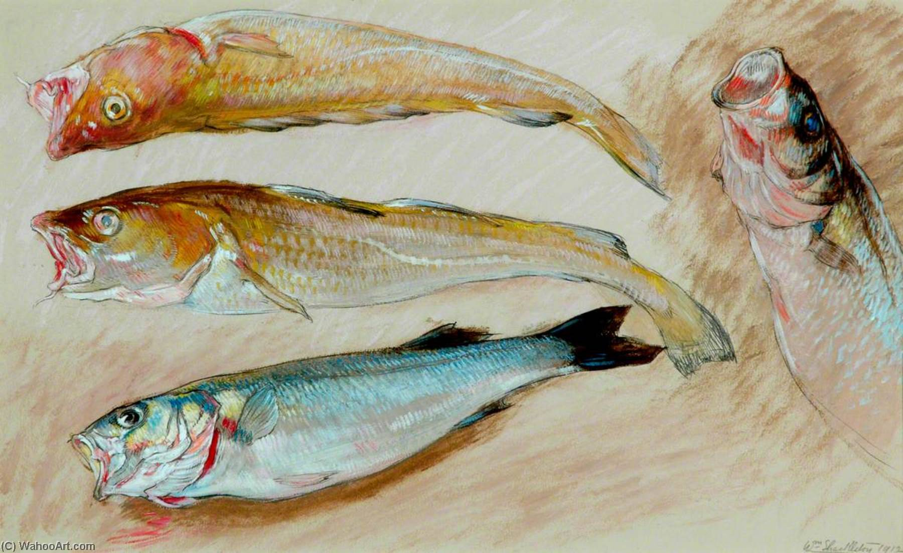 Order Art Reproductions | Study of Four Fish for `The Mackerel Nets`, 1912 by William Shackleton | WahooArt.com