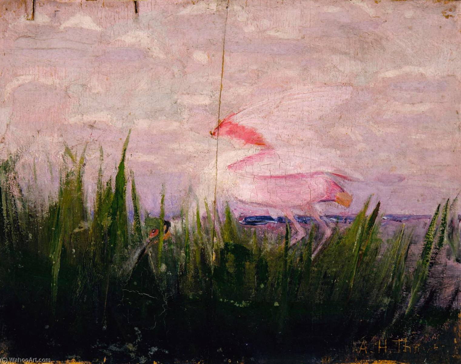 Roseate Spoonbill, study for book Concealing Coloration in the Animal Kingdom, Oil by Abbott Handerson Thayer (1849-1921, United States)