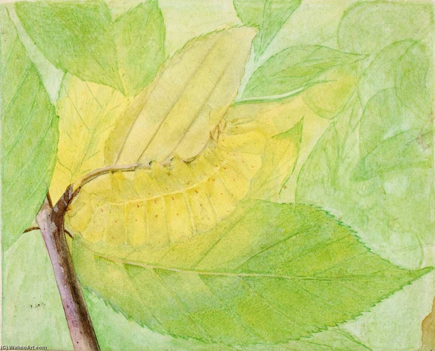 Lunar Caterpillar, study for book Concealing Coloration in the Animal Kingdom, Watercolour by Abbott Handerson Thayer (1849-1921, United States)