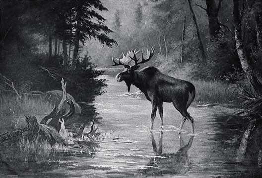 Water and Wood Scene with Moose, (painting), Oil by Von Luerzer (1851-1913)