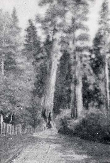 Redwood Forest Two Sentinels , (painting), 1904 by Von Luerzer (1851-1913) | Famous Paintings Reproductions | WahooArt.com