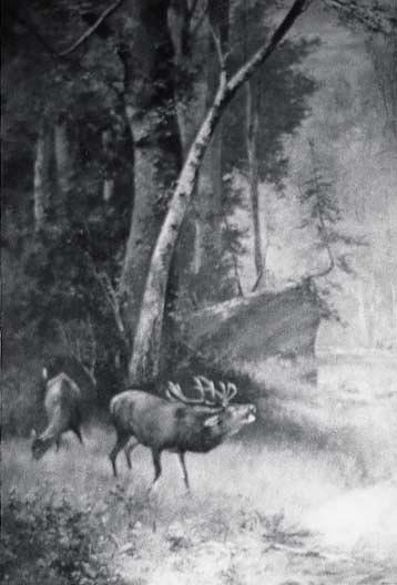 Wood Scene with Elk in Foreground, (painting), Oil by Von Luerzer (1851-1913)