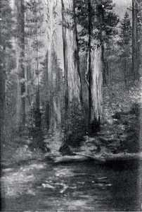 Order Oil Painting : Little Redwood, (painting) by Von Luerzer (1851-1913) | WahooArt.com