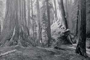 Von Luerzer - Redwood Forest Fallen Monarch , (painting)
