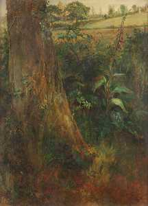 Frederick Henry Henshaw - Tree Trunk and Foxglove