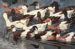 Charles Frederick Tunnicliffe - Ducks (study)