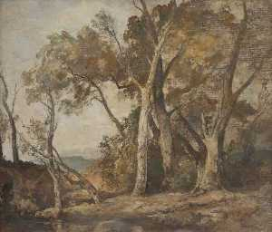 Oliver Hall - A Composition of Forest Trees