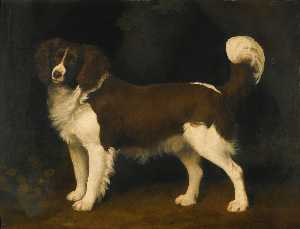 George Stubbs - Portrait of a dark brown and white Newfoundland spaniel