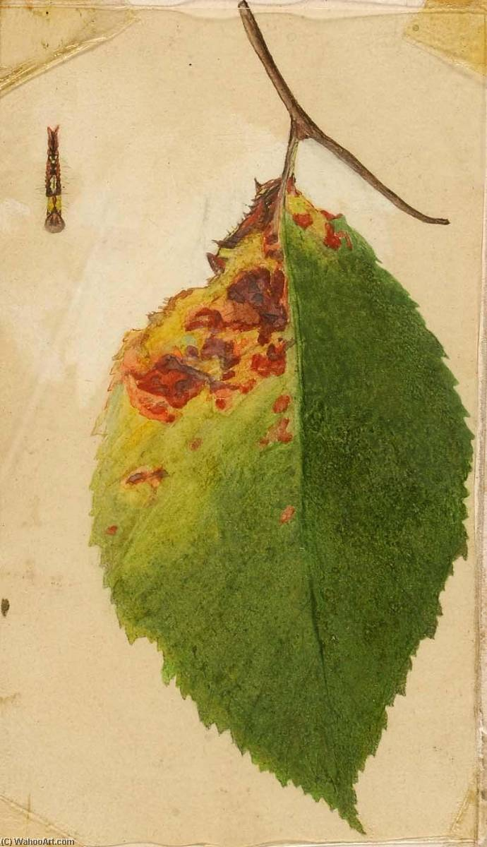 Crumpled and Withered Leaf Edge Mimicking Caterpillar, study for book Concealing Coloration in the Animal Kingdom by Emma Beach Thayer | Reproductions Emma Beach Thayer | WahooArt.com
