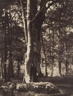 Buy Museum Art Reproductions | Forest of Fontainebleau, 1852 by Gustave Le Gray (1820-1884) | WahooArt.com