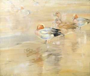 Peter Markham Scott - Widgeon Asleep in the Noonday Sun