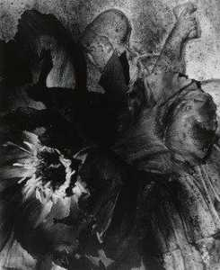 Walter Chappell - Tree Peony Blossom near an Old Urn