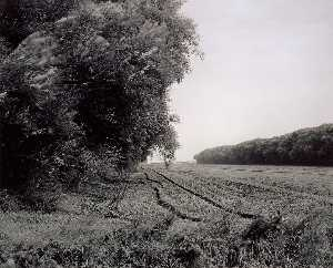 Gregory Conniff - Portage County, Wisconsin Windbreaks, September 1989