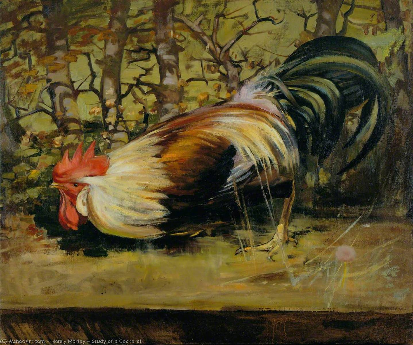 Study of a Cockerel, Oil On Canvas by Henry Morley