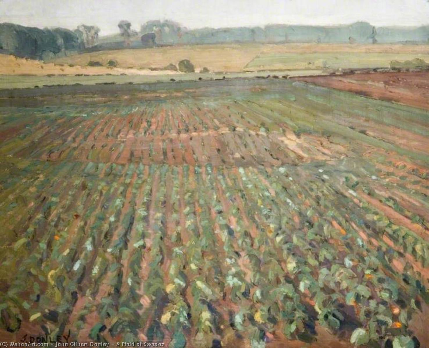 A Field of Swedes, Oil On Canvas by John Gilbert Donley