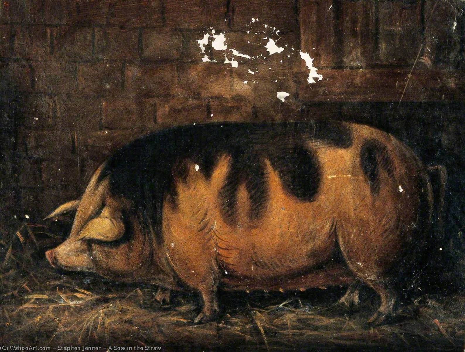 A Sow in the Straw, Oil by Stephen Jenner