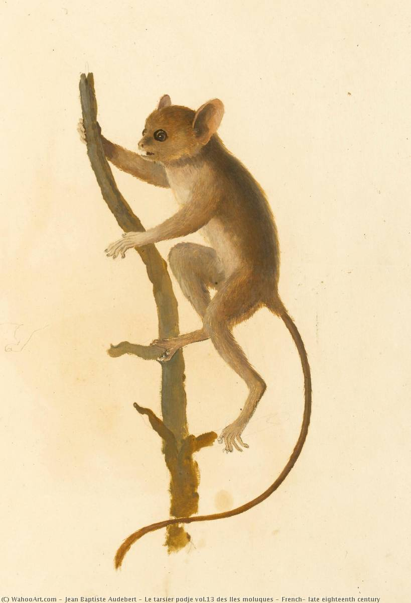 Order Paintings Reproductions | Le tarsier podje vol.13 des Iles moluques , French, late eighteenth century by Jean Baptiste Audebert (1759-1800) | WahooArt.com